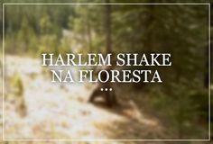 Harlem Shake na floresta: Os ursos que curtem a vida adoidado