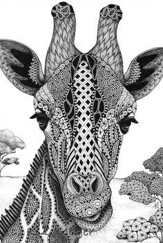 Giraffe Portrait Matted Print From Original Drawing