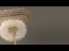 The Cinematic Orchestra - Ma Fleur (Full Album) - YouTube