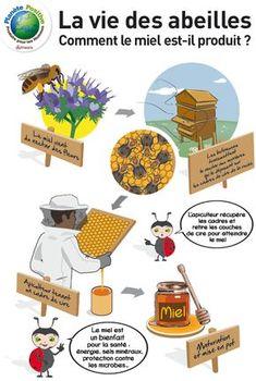 production de miel