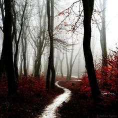 Fall Landscape Photography by Nelleke Pieters