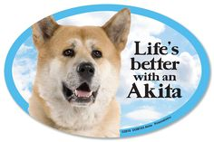 Akita Oval Dog Magnet for Cars >>> Want additional info? Click on the image. (This is an affiliate link and I receive a commission for the sales)