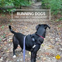 The best dogs for runners. #running #dogs