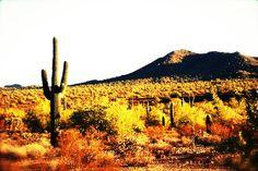 Beautiful Arizona Desert.