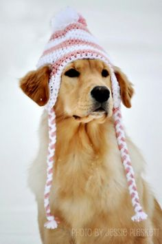 Ravelry: Crochet Doggie Hat Pattern pattern by Jessie Plaskett. I don't have a dog & don't crochet but love this dog & her hat! Cute Puppies, Cute Dogs, Funny Dogs, Awesome Dogs, Havanese Puppies, Tiny Puppies, Retriever Puppies, Pomeranian Puppy, Pet Clothes