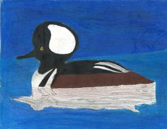 The 2013 Florida Junior Duck Stamp of Andred Francia, 14, honorable mention in Group 3, grades 7-9. DDWS photo