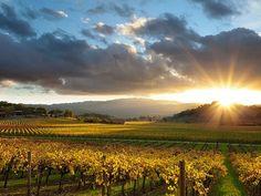 Napa, California, can't wait to plan a trip to wine country. Sonoma Valley, Napa Valley, Portland, Vancouver, Margaret River Wineries, Las Vegas, Napa California, Northern California, Viajes