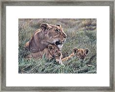A Quiet Moment Lioness and Lion Cubs by Alan M Hunt Wildlife Paintings, Wildlife Art, Cat Paintings, Big Cats Art, Cat Art, Animal Art Prints, Canvas Art Prints, Rusty Spotted Cat, Black Footed Cat