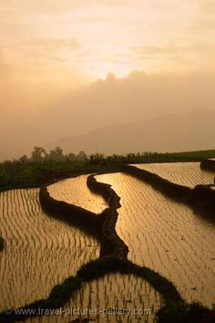 Bukittinggi, Sumatra, Indonesia. A back to nature destination. Beautiful terraced paddy fields.