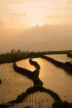 Bukittinggi, Sumatra, Indonesia. A back to nature destination. Beautiful terraced paddy fields.