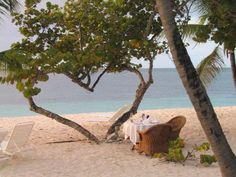 Heart shaped palm tree in Grenadines.  (Website credits jilldg1)