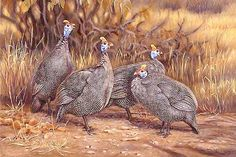 Painting:guineafowl In Mopane Photo, Detailed about Painting ...