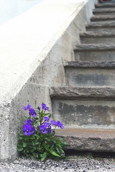 The Flowers of the Stone....a surprise where you don't think :)...so poetic...