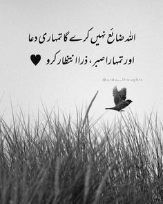 Urdu Funny Poetry, Poetry Quotes In Urdu, Best Urdu Poetry Images, Love Poetry Urdu, Quotations, Qoutes, Life Quotes, Beautiful Quotes About Allah, Quran Quotes Love