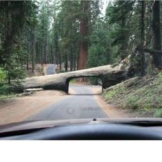 An unusual tunnel in California's Sequoia National Park