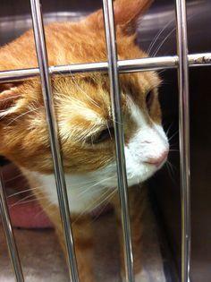 I'm adoptable thru pet smart. 07/24 Lavista rd. Tucker