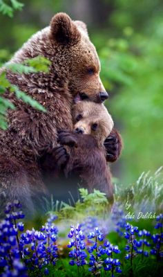 Animals Images, Animals And Pets, Baby Animals, Funny Animals, Cute Animals, Beautiful Creatures, Animals Beautiful, Bear Species, Black Bear Cub