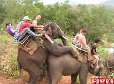 Why not right!? Elephant just needed some poon lol