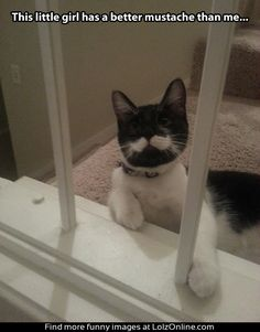 cat mustache stairs house