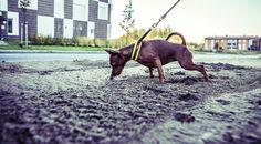 #nasuperro #cute #dog