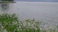Lake Biwa 琵琶湖Takashima(滋賀県高島市)近江今津42 竹生島遠望