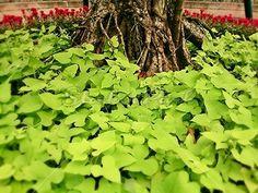 Green leafs in the garden | Photo | StockerPark