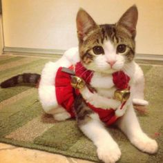 13 best Cute Cat Outfits images on Pinterest | Dog cat, Cats and Cut ...