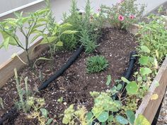 Leaks at Junctions Above Ground Sprinkler System, Water Sprinkler System, Water Irrigation, Watering Raised Garden Beds, Garden Watering System, Water Plants, Water Garden, Prairie Garden, Water Drip