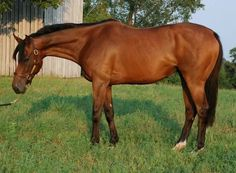 Does this attractive gelding have the potential to be a top eventer? Learn how spot Eventing talent at the racetrack with this educational series...