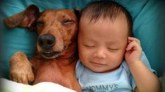 Dog Becomes International Hero After Rescuing Abandoned Infant http://faithreel.com/dog-saves-rescues-abandoned-infant/…
