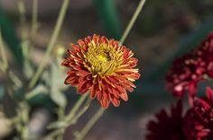 Yellow Red Bloom Combination https://madipix.com/yellow-red-bloom-combination/