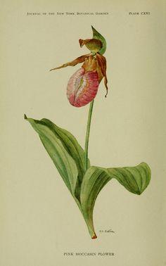 Wild plants needing protection. - Biodiversity Heritage Library