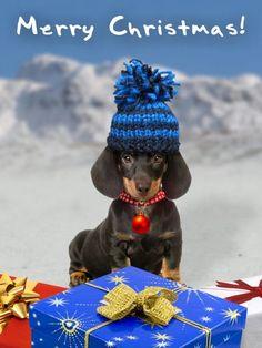 Christmas Dachshund