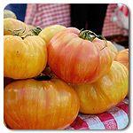 Organic Copia Tomato