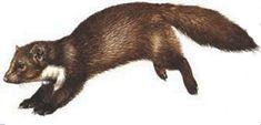 La Martre, Nature, Animals, Garden, 50th Anniversary, Wild Animals, Cats, Mice Repellent, Diy Chicken Coop