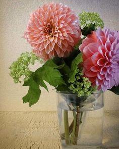 昨日。 夫がいただいたカワイイ花束。 佳い感じにウロコが開き 部屋の真ん中で みずみずしく泳いでおりました。 #flower #花