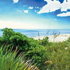 Don Pedro Island State Park. Eleven nature trails weave past giant leather ferns on 225 acres, where you can fish off the dock for flounder, snook, and trout. Coastalliving.com