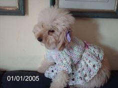 Luty Artes Crochet: Roupa em crochê para seu Pet + Grafico e passo a passo.