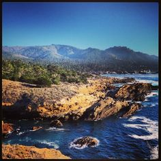 A beautiful place to hike and observe wildlife, #PointLobos is a must visit along the coast.