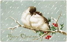 Cartão do Natal do vintage, pássaros do amor gráfico, pássaro bagas do azevinho illus, cartão antiquado do Natal, pássaros no ramo clipe de arte