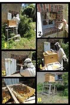 Nouveau départ pour un essaim d'abeilles