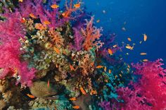 Coral reefs are sometimes considered the medicine cabinets of the 21st century. Coral reef plants and animals are important sources of new medicines being developed to treat cancer, arthritis, human bacterial infections, Alzheimer's disease, heart disease, viruses, and other diseases.