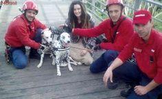 Bombeiros salvam cães que caíram de penhasco com cerca de 10 metros