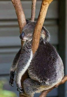 25 trendy funny animals pictures for kids sweets Animals And Pets, Baby Animals, Funny Animals, Cute Animals, Animal Pictures For Kids, Funny Animal Pictures, Australian Animals, Tier Fotos, Mundo Animal