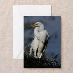 Great Egret Photograph