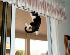 This is Spider Cat.  How can you not laugh?