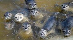 Fotostrecke: Junge Seehunde kehren in die Freiheit zurück
