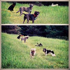 """We do what we want!"" #evasplaypupspa #dogdaysofsummer #endlessmountains #mountpleasant"