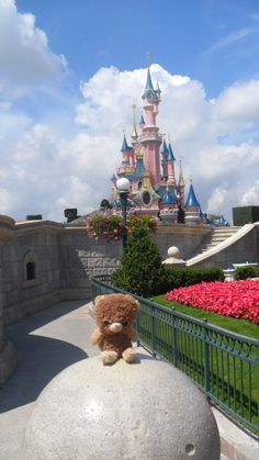 Yorkie at Disney land Paris