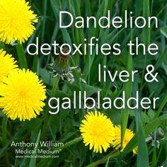 Liver Cleanse Remedies Dandelion detox cause liver and gallbladder Liver Detox Cleanse, Detox Diet Plan, Body Detox, Gallbladder Cleanse, Natural Cleanse, Natural Detox, Natural Health, Healthy Liver, Healthy Detox